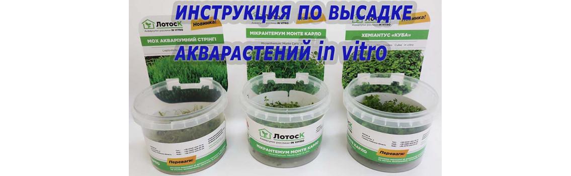 Инструкция по высадке акварастений in vitro